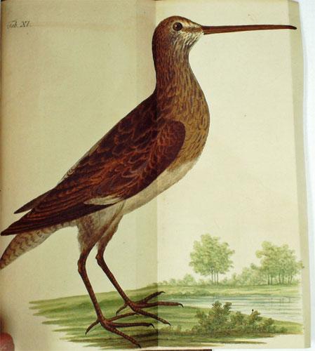 NILSSON, SVEN - Ornithologia Suecica. 2 Volumes in One