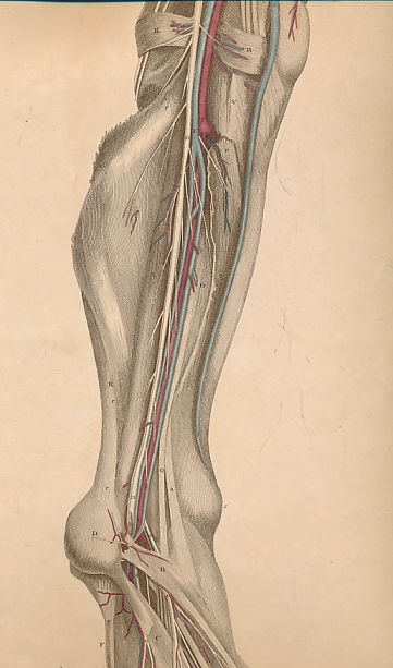 LIZARS, JOHN - System of Anatomical Plates with Descriptive Letter-Press. Part III - Blood-Vessels and Nerves