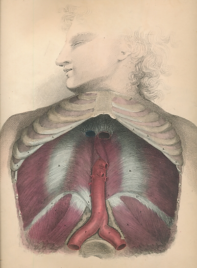 LIZARS, JOHN - System of Anatomical Plates with Descriptive Letter-Press. Part IV - the Muscles of the Trunk