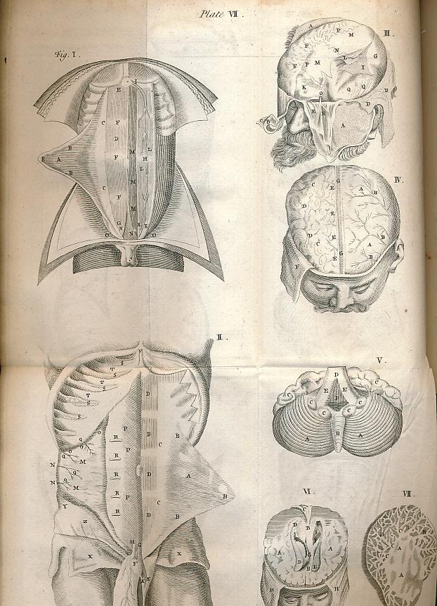 [GIBSON, THOMAS]; M. N - Anatomy Epitomized and Illustrated