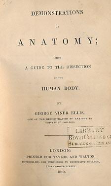 sonographie atlas niere
