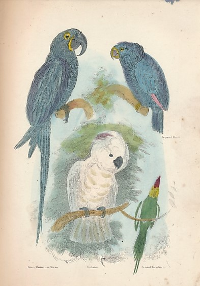 CUVIER, BARON; CARPENTER, W B; WESTWOOD, J O; LANDSEER, EDWIN [ILLUS.] - The Animal Kingdom. Arranged After Its Organisation Forming a Natural History of Animals and an Introduction to Comparative Anatomy