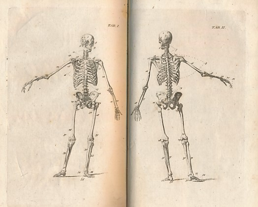 [A GENTLEMAN OF THE FACULTY] - Anatomical Dialogues: Or, a Breviary of Anatomy . .