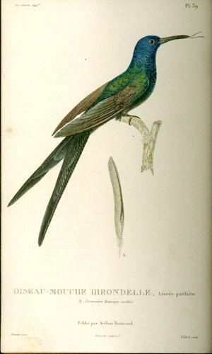 LESSON, RENE PRIMEVERE - Histoire Naturelle Des Colibris, Suive D'Un Supplement a L'Histoire Naturell Des Oiseaux- Mouches