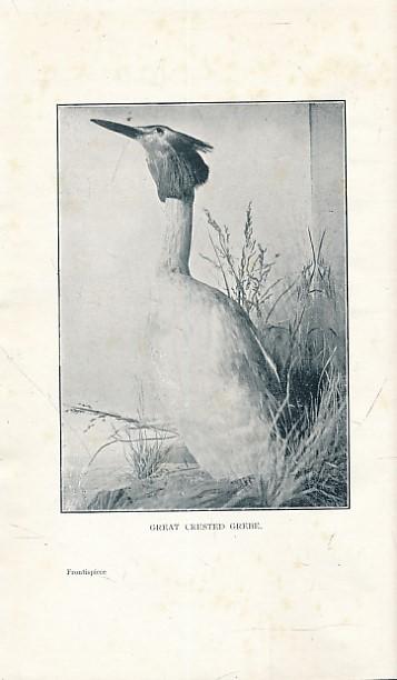 HALLIDAY, W - Wild Birds and Their Haunts