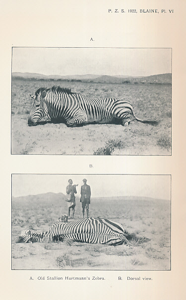 THE ZOOLOGICAL SOCIETY OF LONDON - Proceedings of the General Meetings for Scientific Business of the Zoological Sociey of London for the Year 1922. Part II